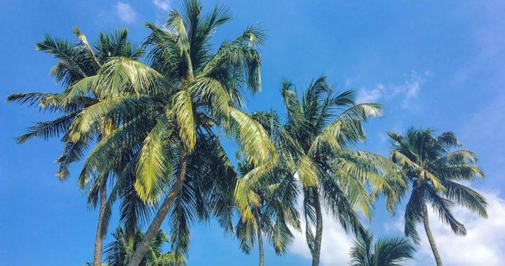 Kochi-is-not-a-city,-it-is-a-rhythm-feeling-2018-blog-2